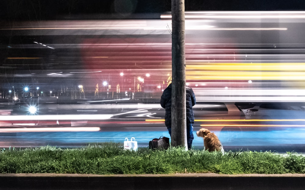 person leaning on post beside dog in timelapse photo