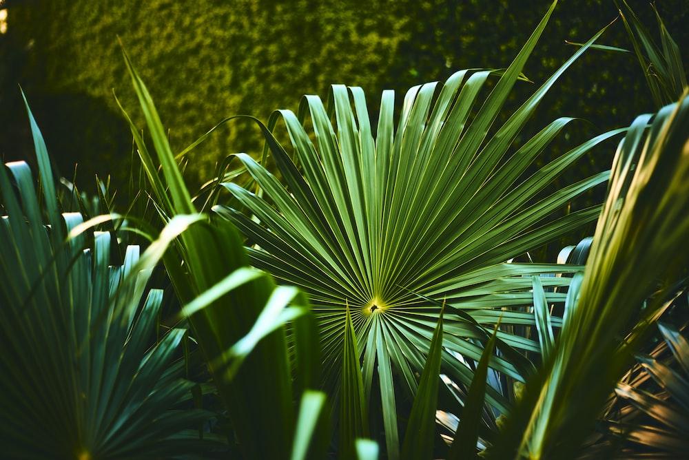 green fan leaves