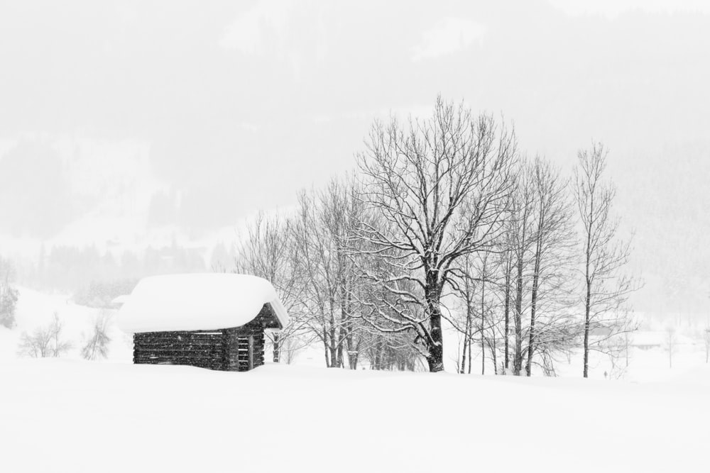 snow covered field and house roof and bare trees