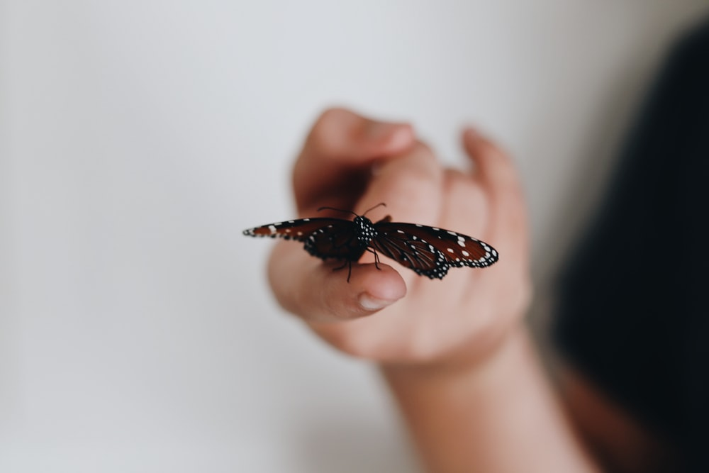 selective focus photography of red butterfly porches on human finger