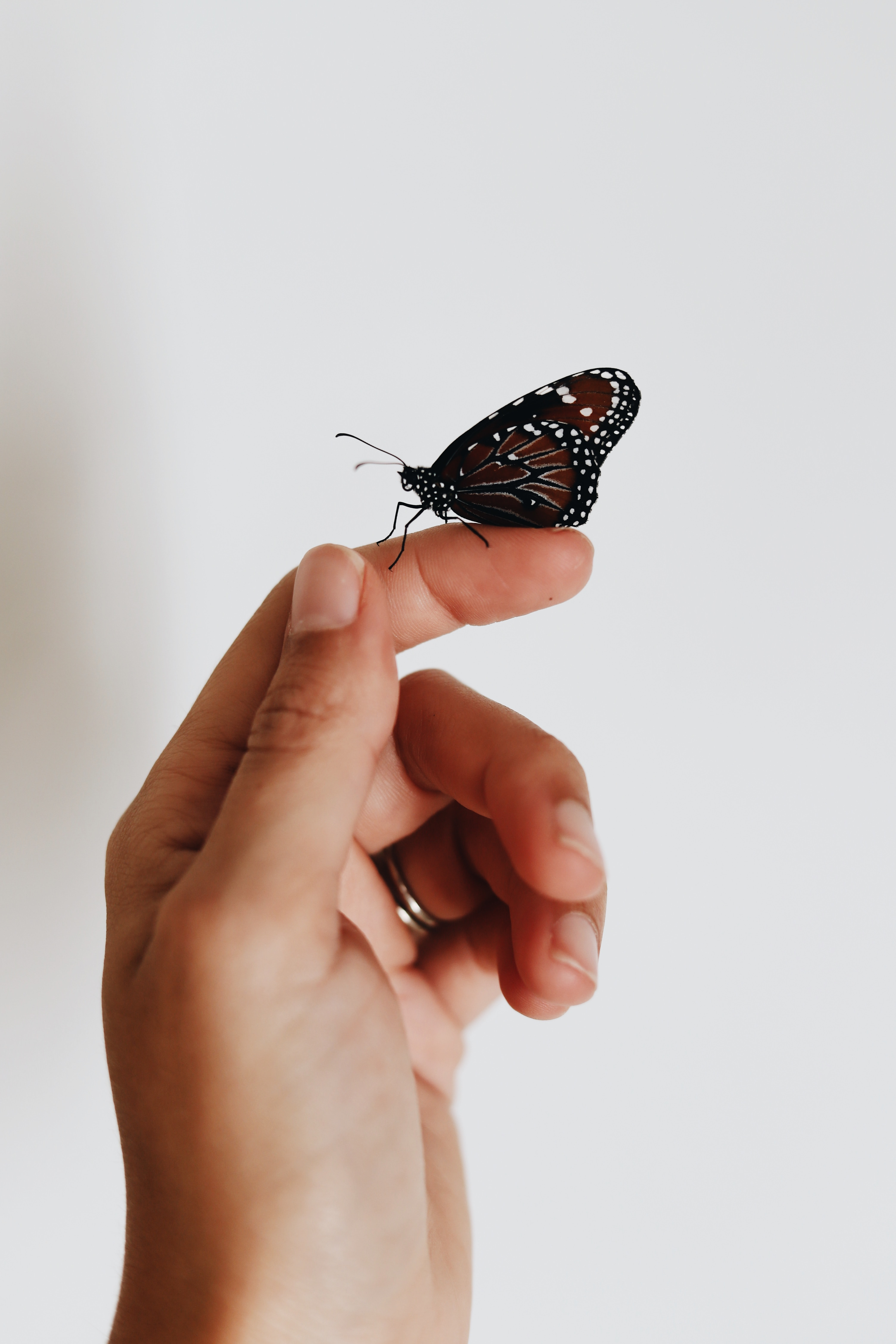 brown and black butterfly on person index finger