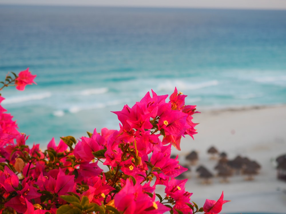 pink petaled flower bloom near in the beach during daytime