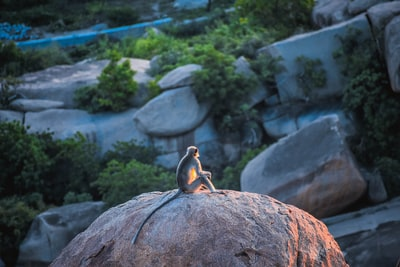 monkey sitting on big rock during daytime monkey teams background