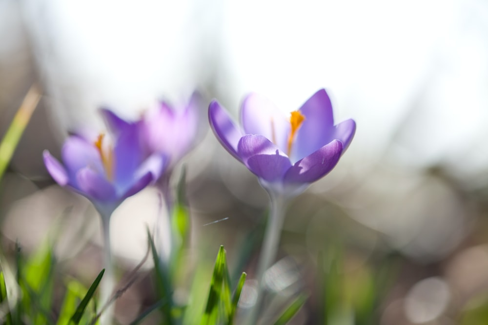 closeup photography of purple petaled flowers