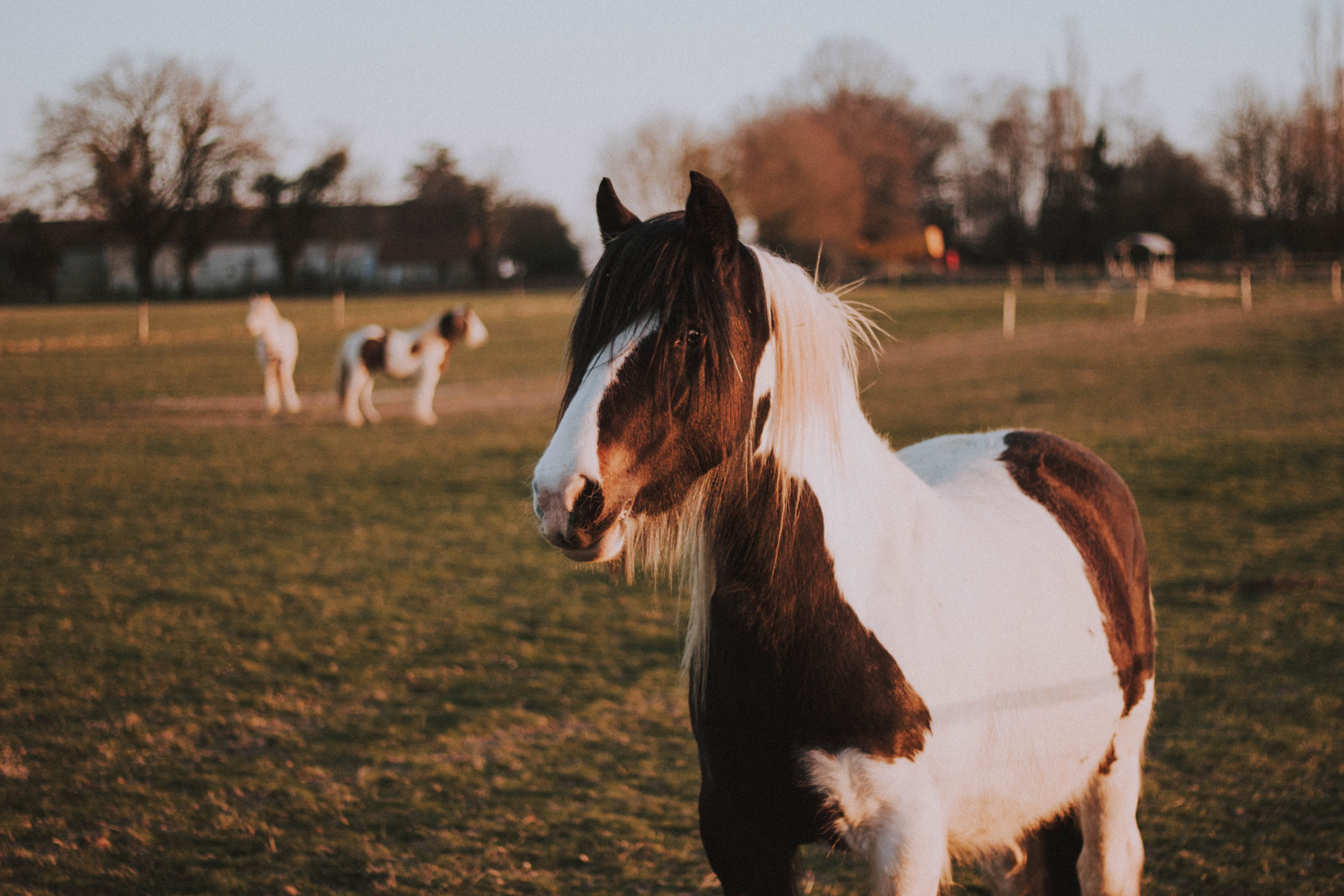 black and white horse on green grass lawn during daytime
