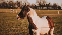 selective focus photography of white and brown horse during daytime