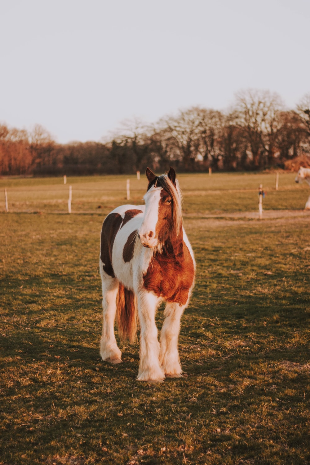 white and brown horse standing on green field during daytime