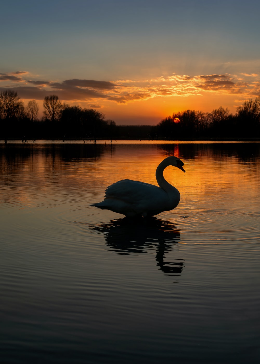 silhouette photography of duck at water