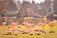 orange flamingo bird outdoor during daytime