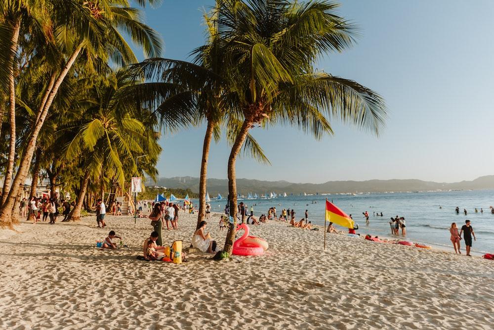 palm tree nearby seashore