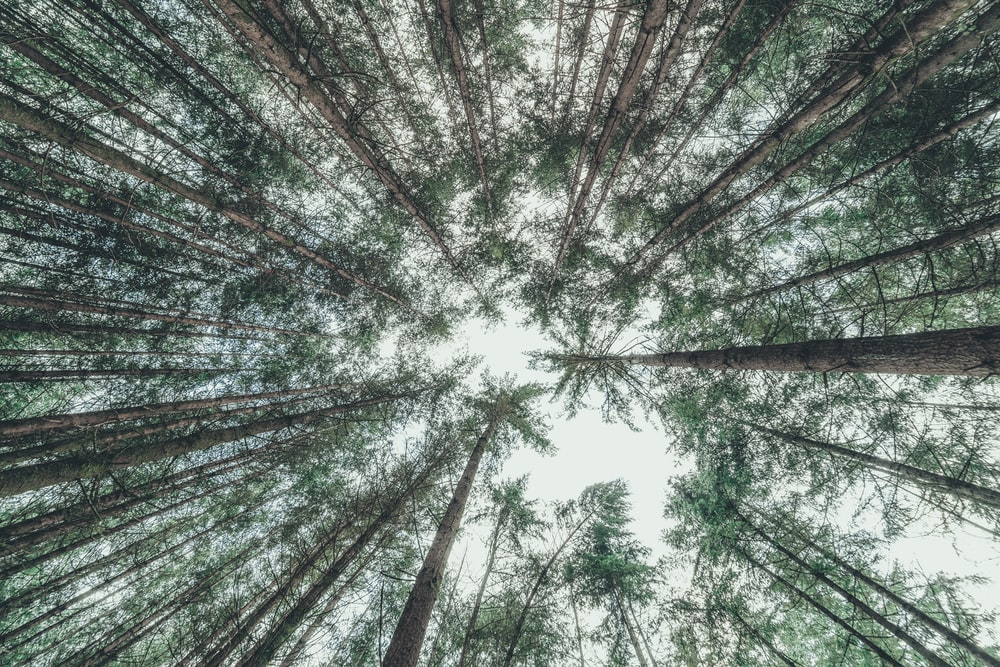 low-angle photography of trees