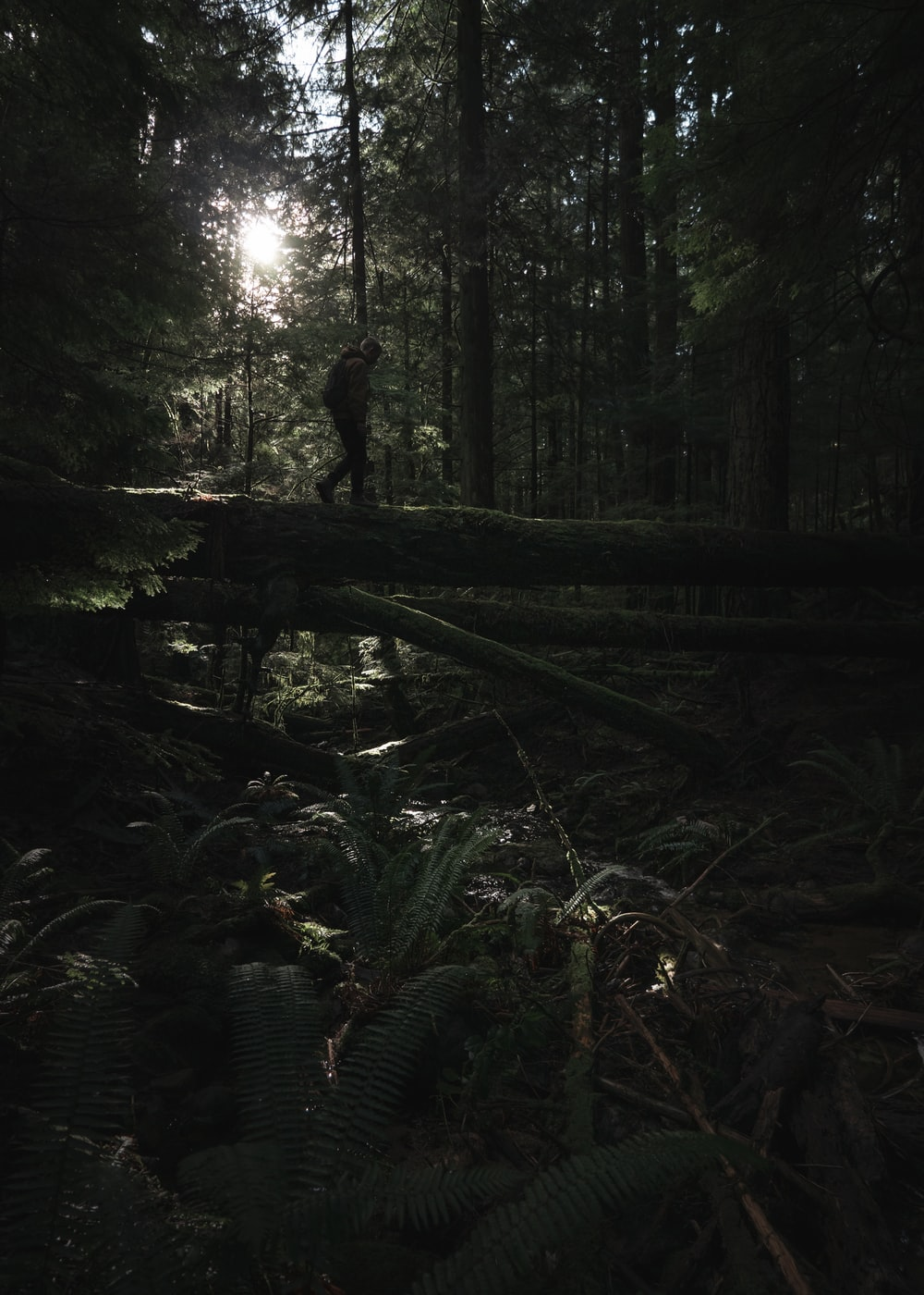 man walking on tree log