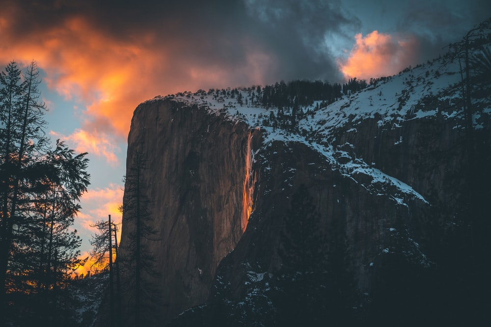pine tree icy mountain scenery