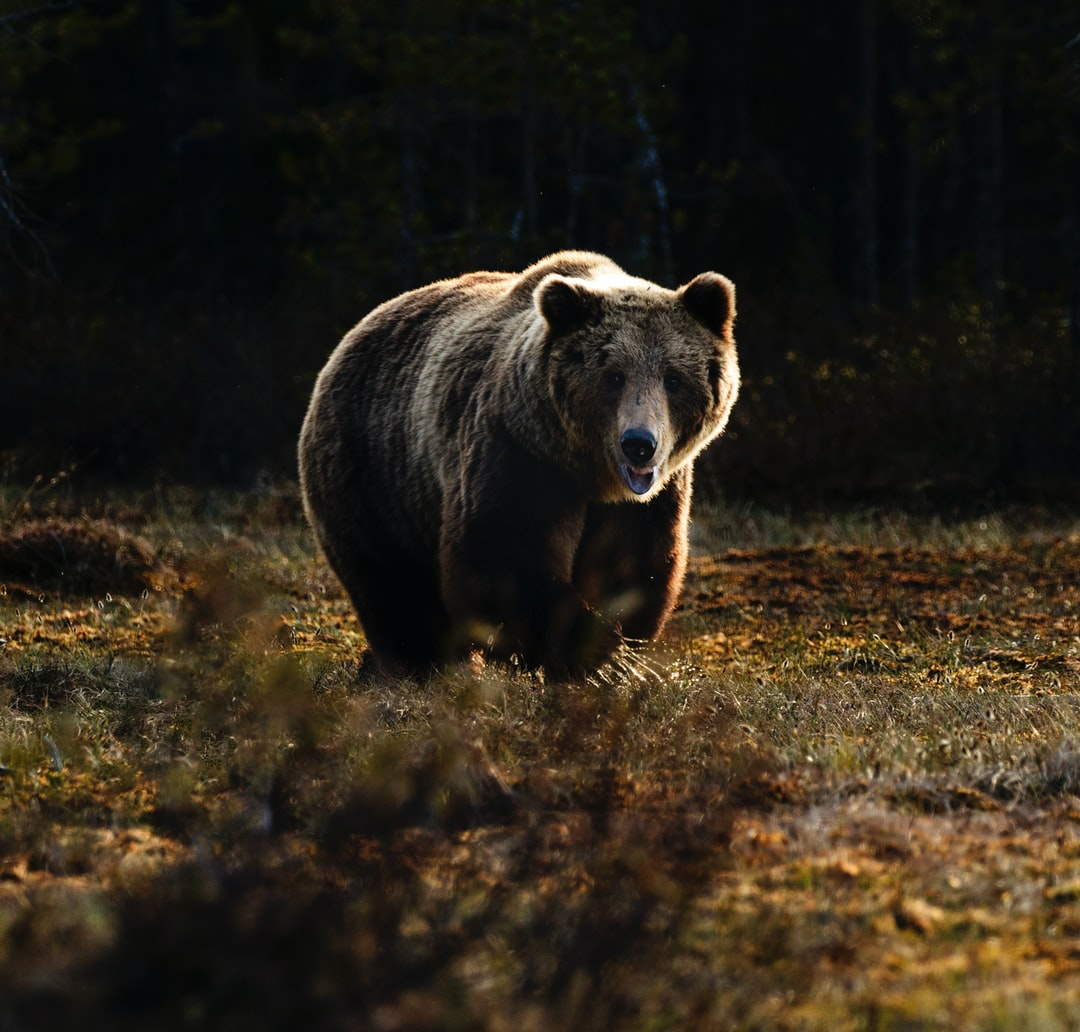 Mammal, animal, bear and wildlife HD photo by Zdeněk Macháček (@zmachacek) on Unsplash