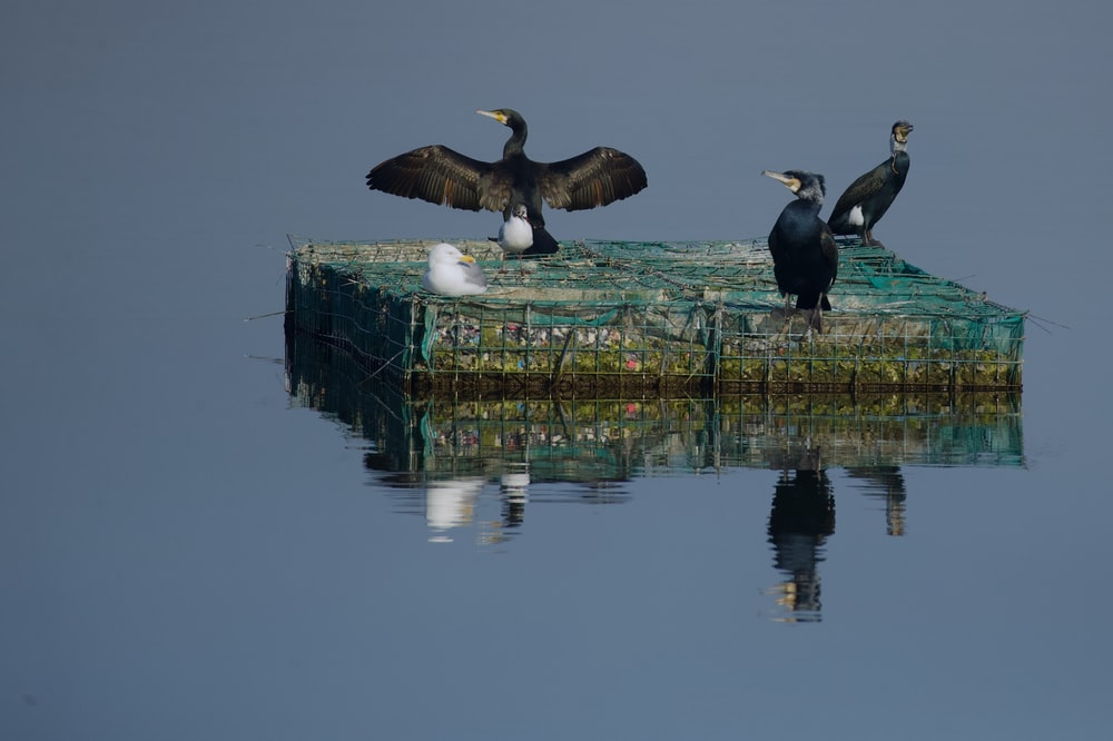 three birds on floating platform on body of water