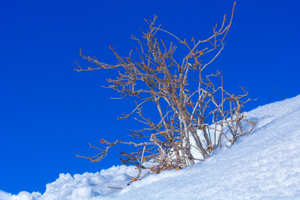 brown bare tree with snow covered field under blue sky during daytime