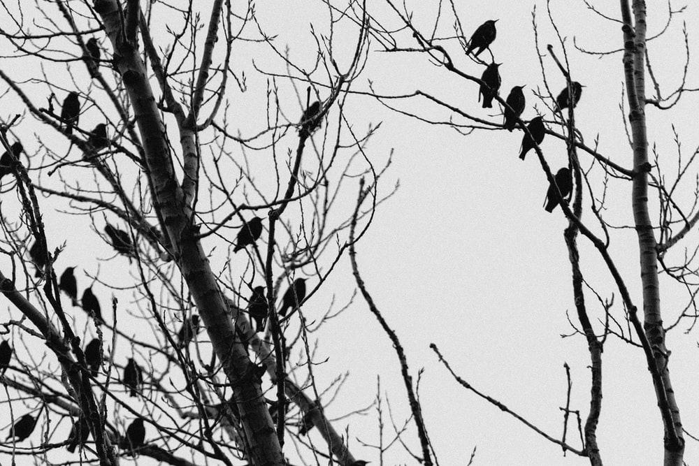 black birds on tree