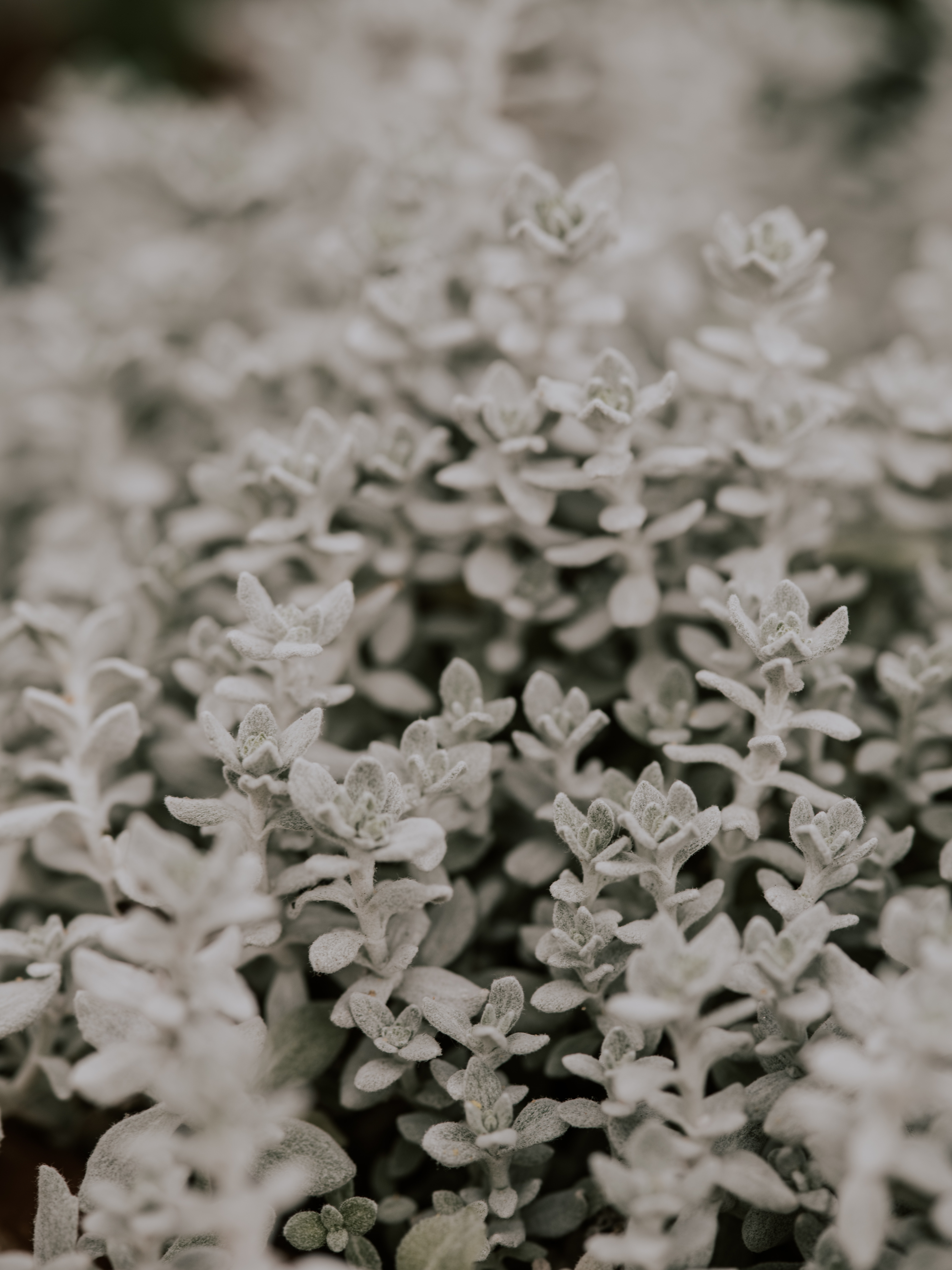 close-up photography of white plant