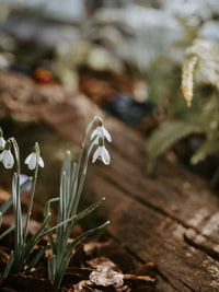 shallow focus photography of green-leafed plant with white flowers