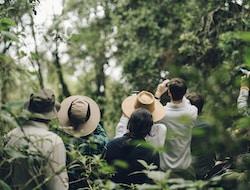 Queen Elisabeth National Park - Ishasha Pirschfahrt - Bwindi Impenetrable National Park