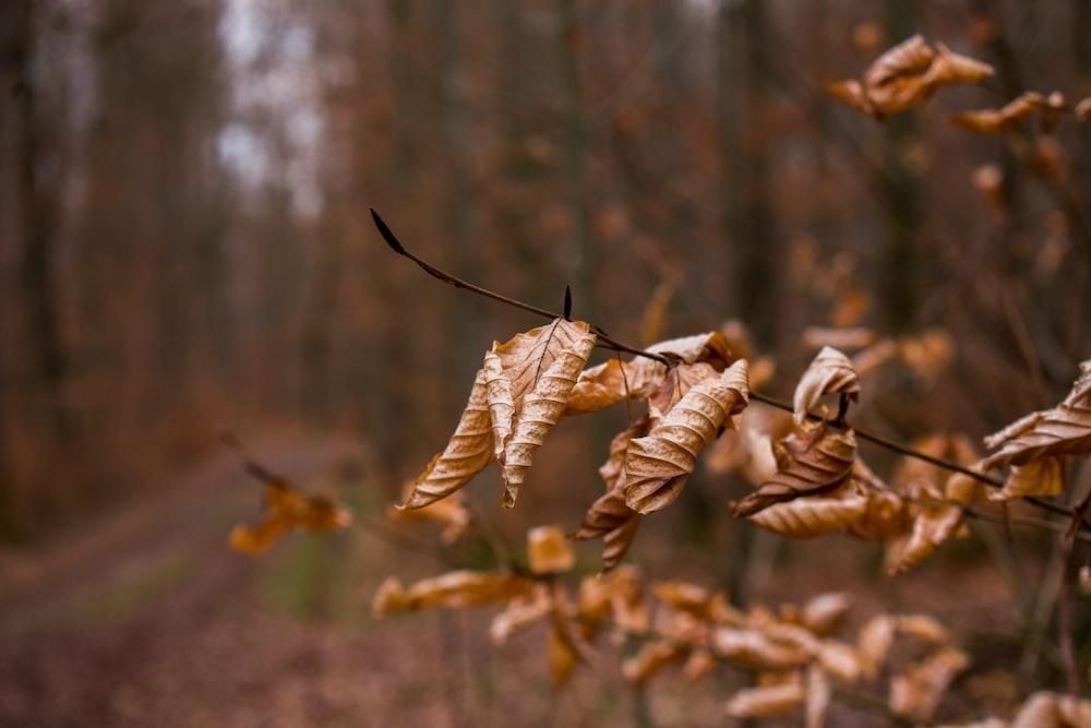 brown dried leaves