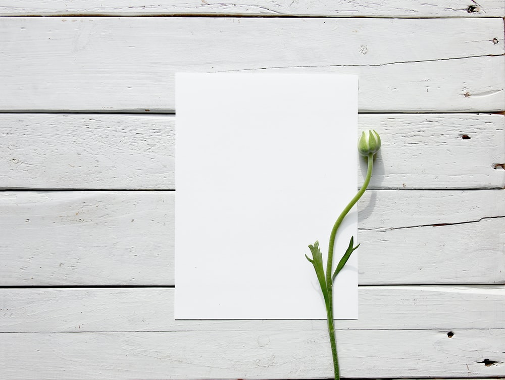 green plant on white paper