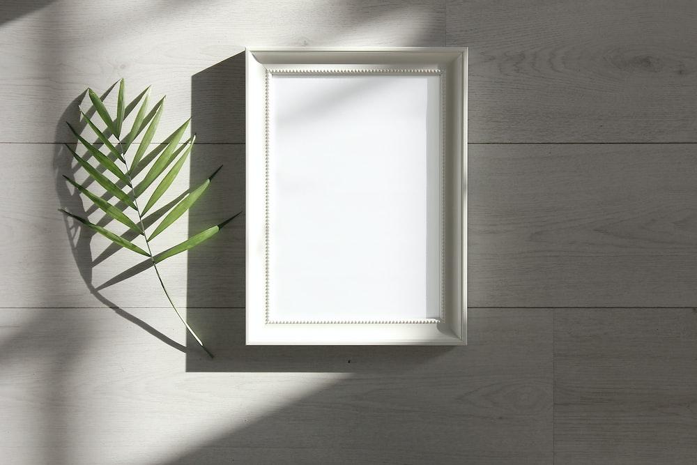 green-leafed beside white photo frame