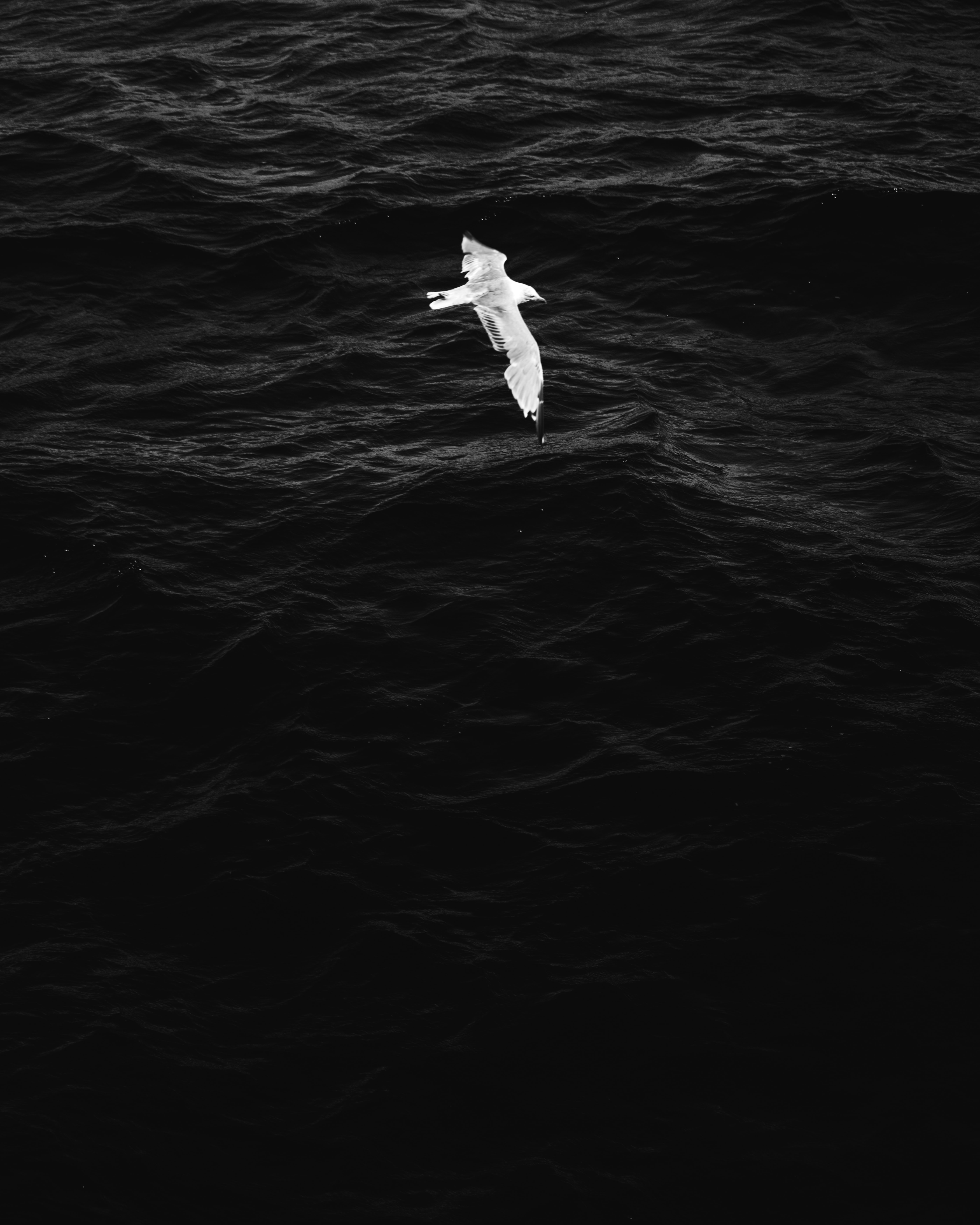 soaring white bird over rippling water
