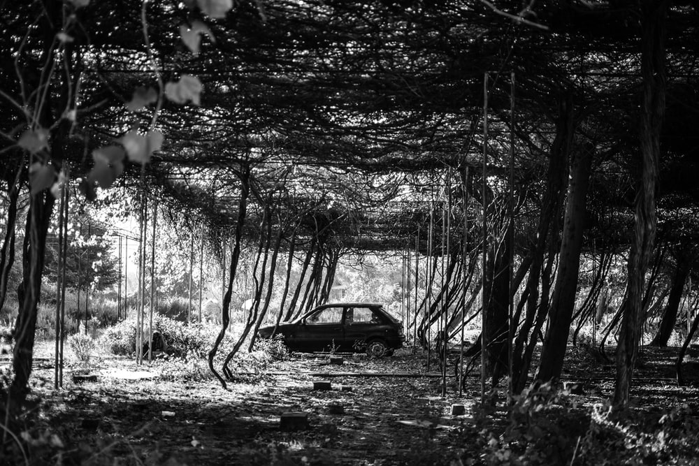 grayscale photography of car surrounded plant