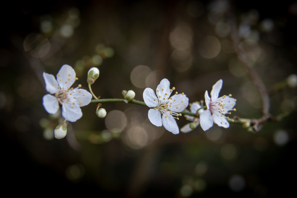 selective focus photography of white-petaled flowers