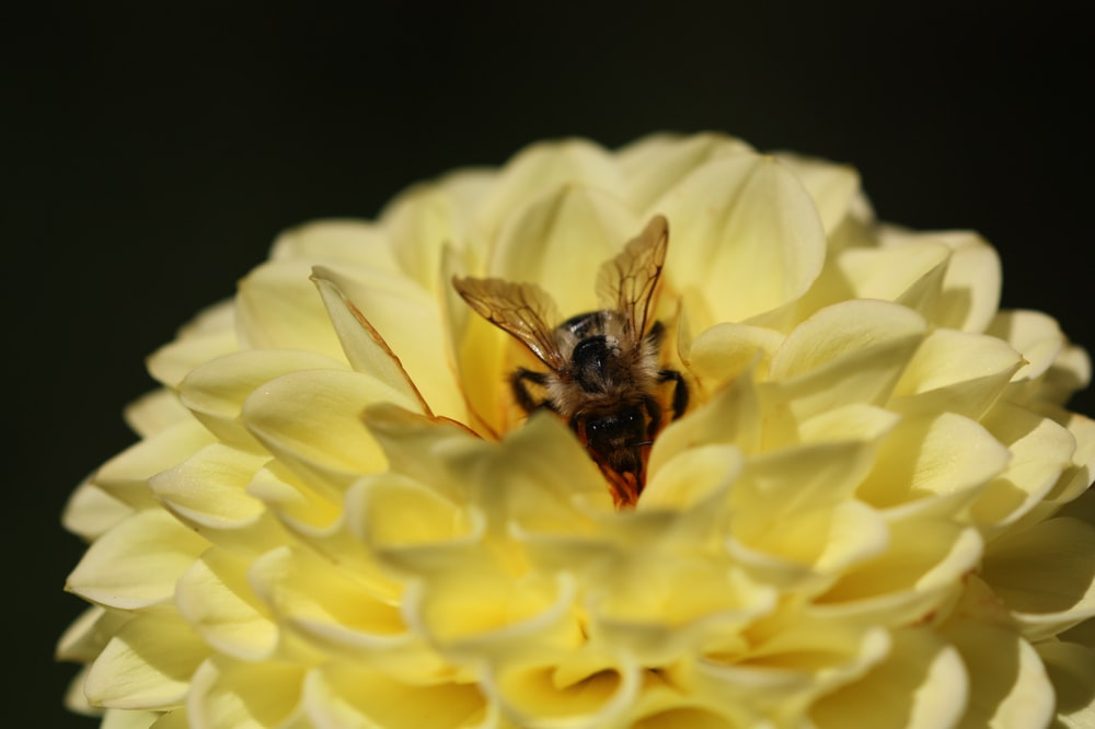shallow focus photography of bee on yellow flower