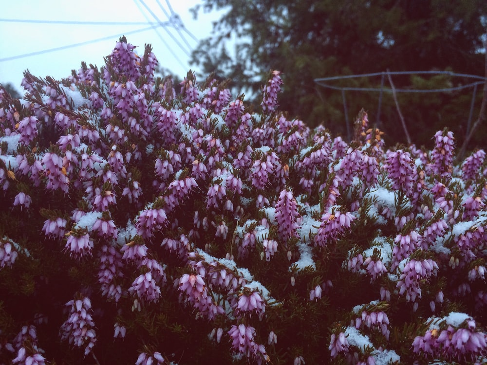 purple and white-petaled flowers during daytime