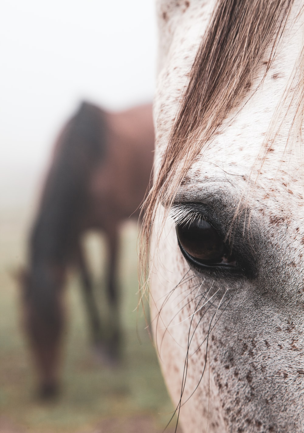 close view of white horse right eye