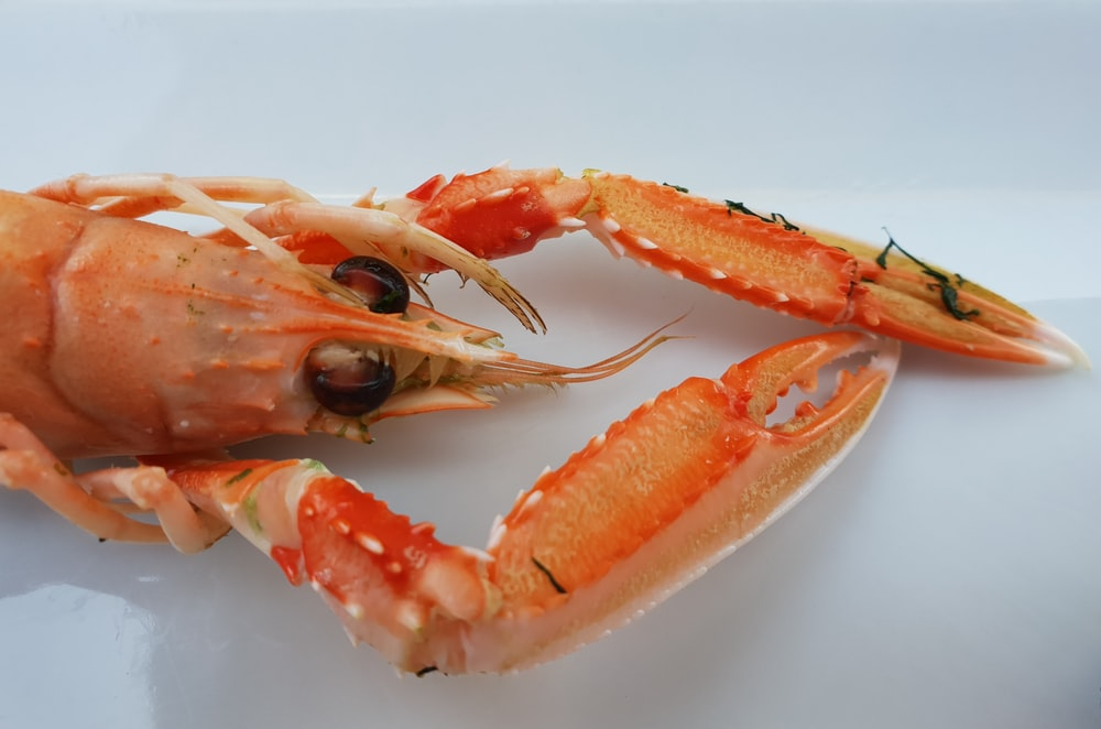 lobster on white surface