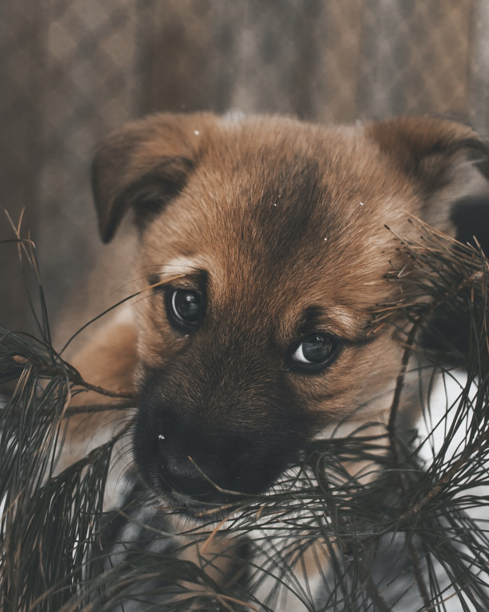 brown puppy biting leaves