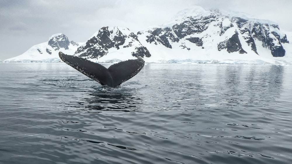 view of whale's tail at the body of water