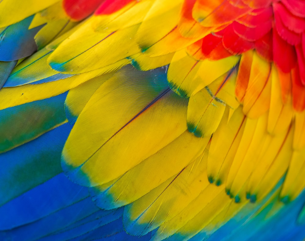 red, yellow and blue macaw
