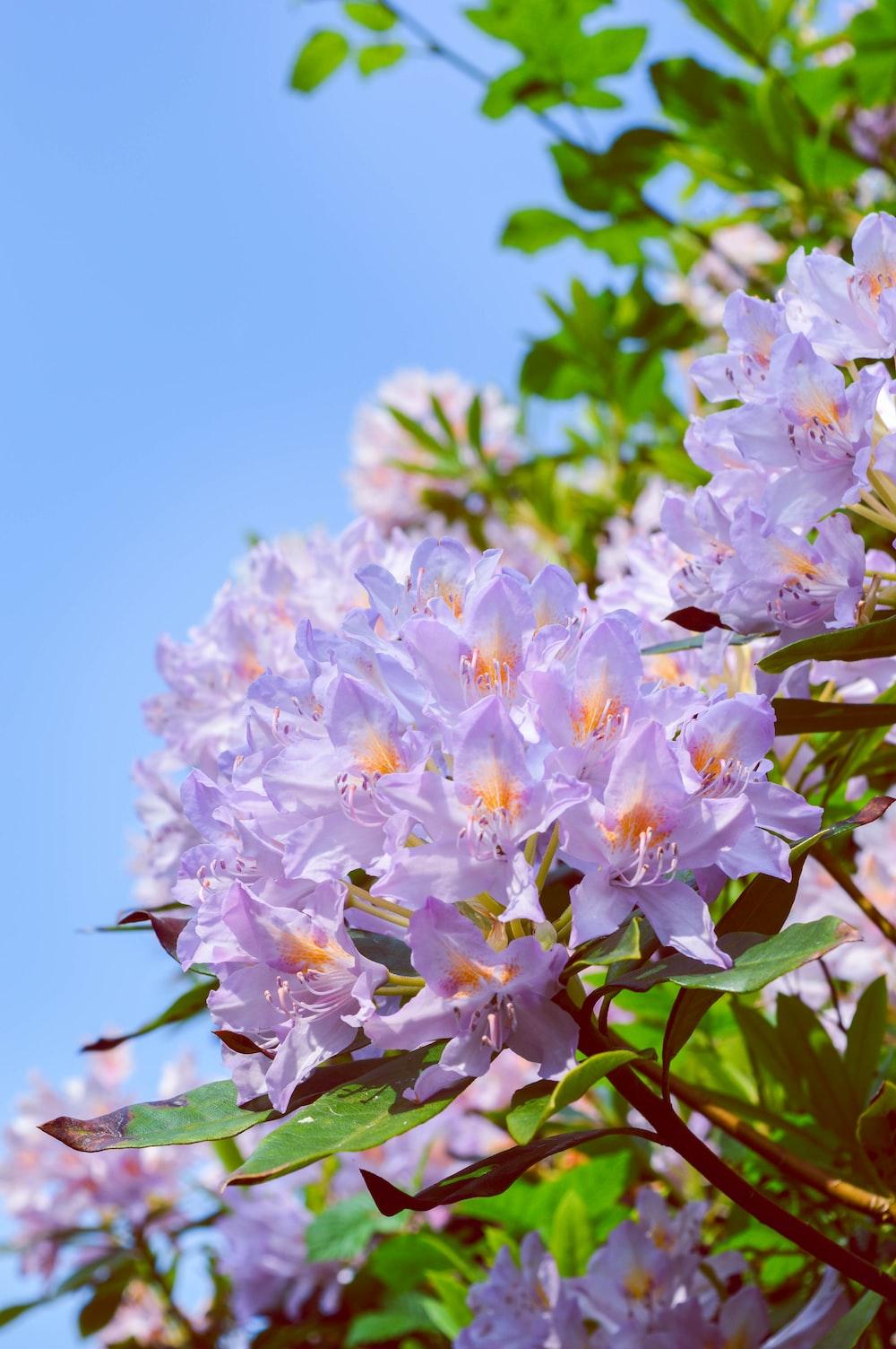 blue-petal flowers