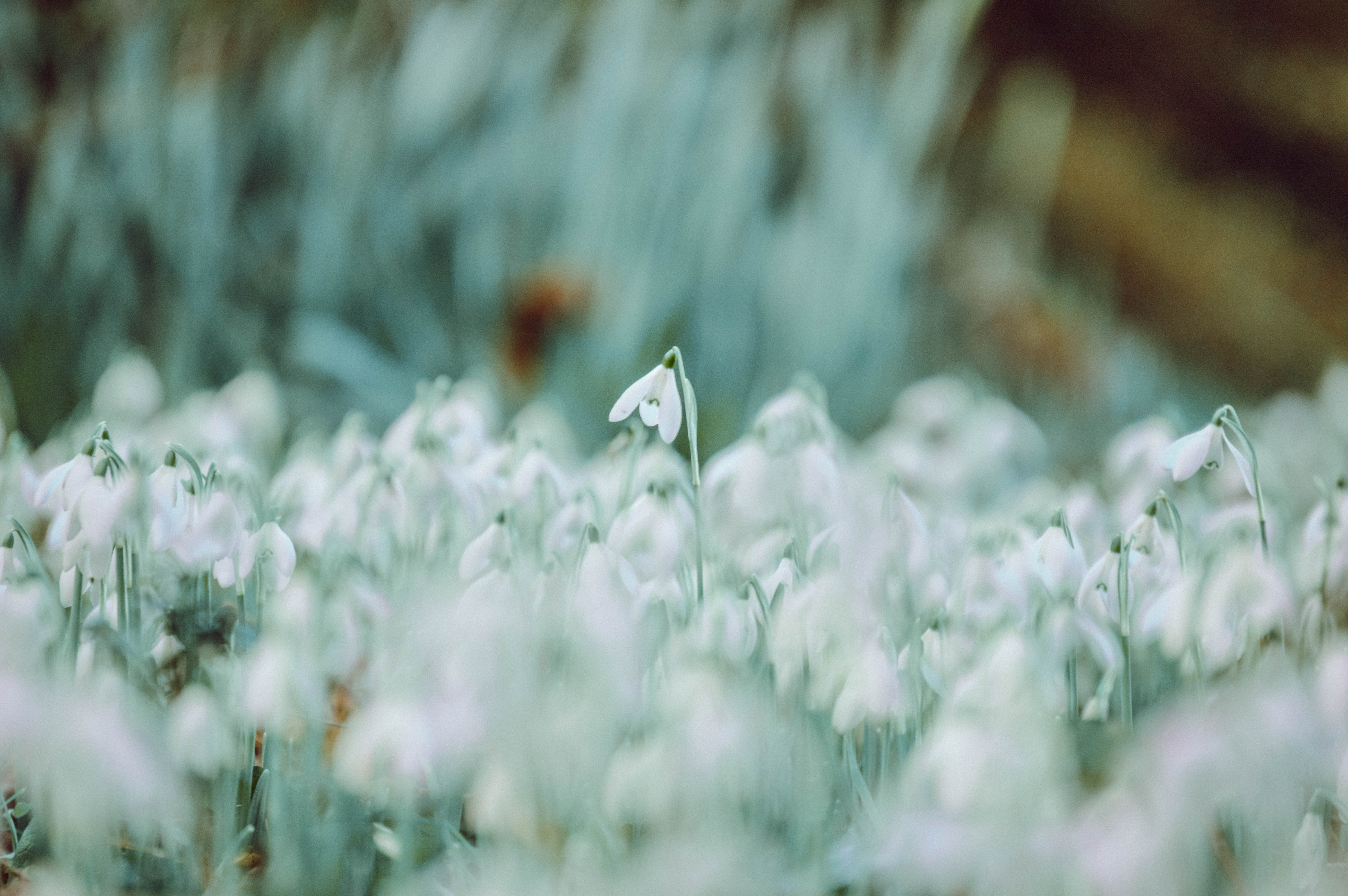 selective focus photography of white petaled flower field