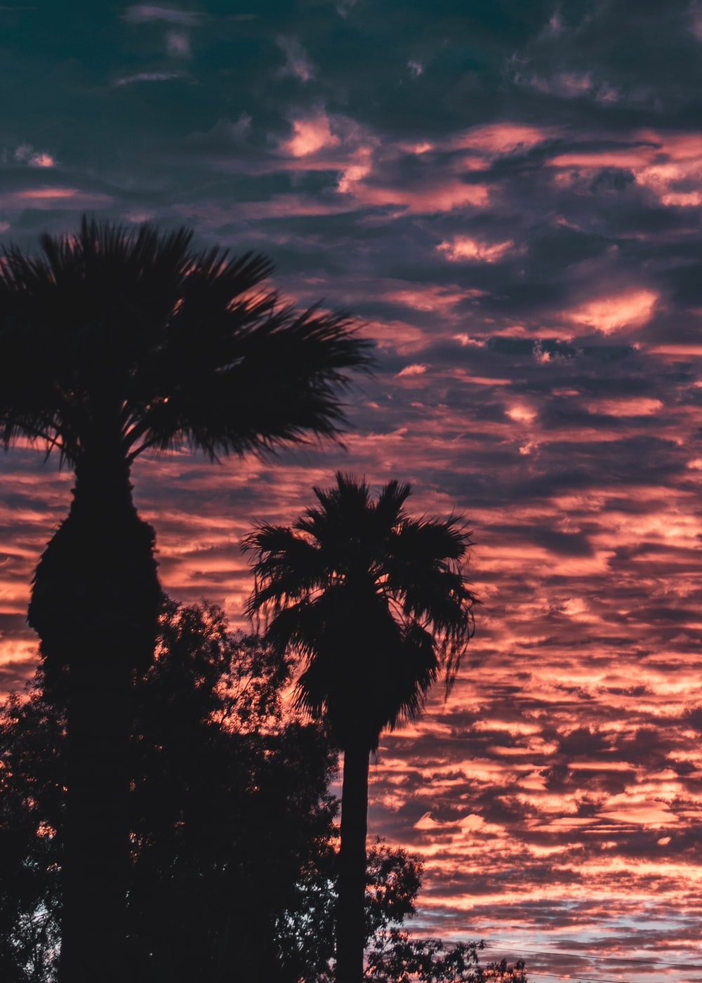 silhouette of palm tree during golden hour