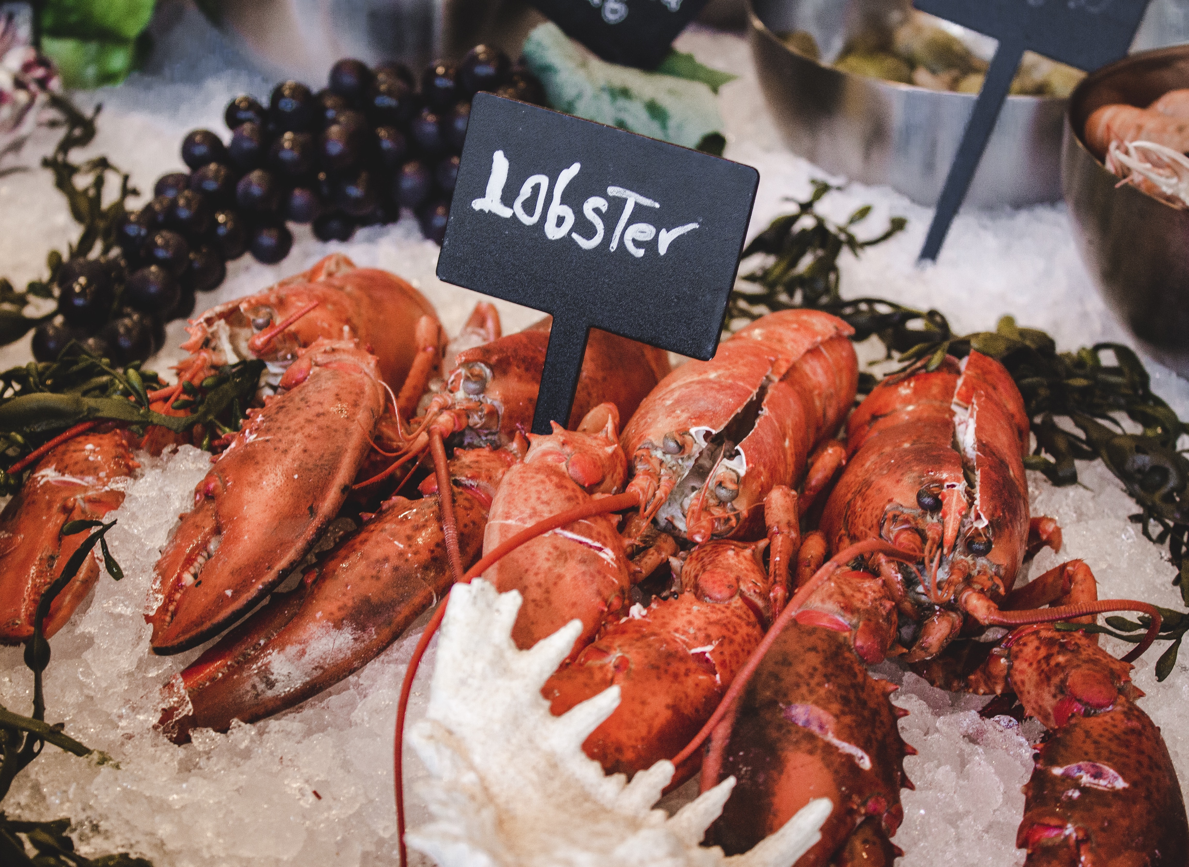 lobster on icy tray