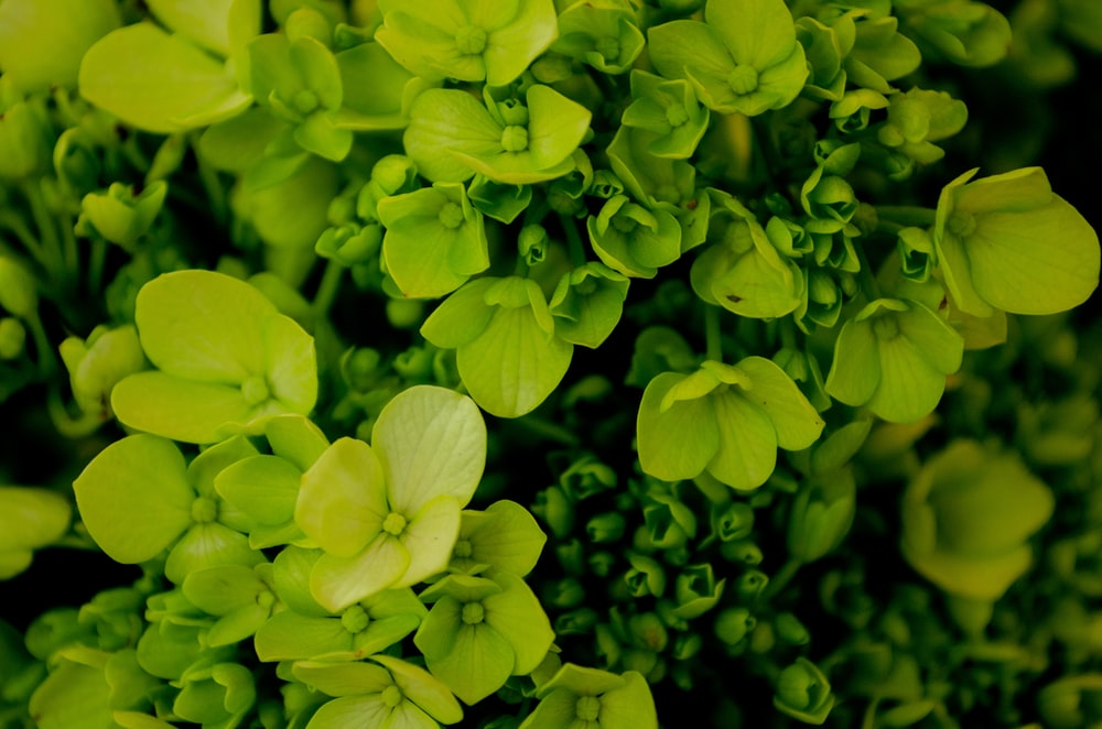 close up photography of green plant