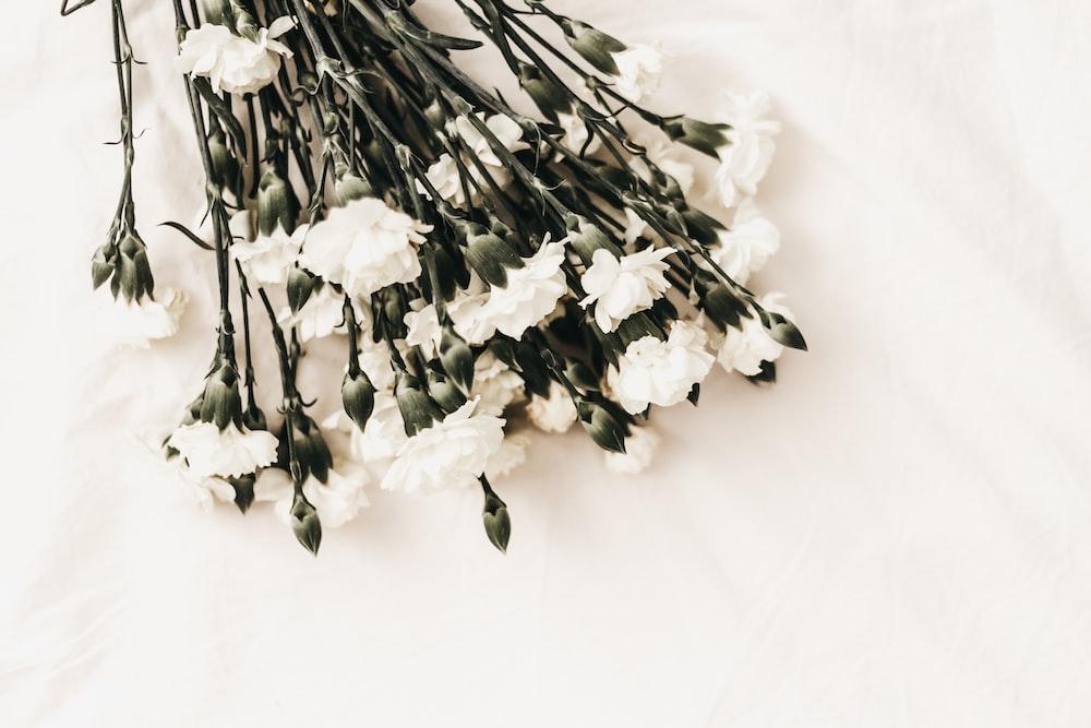 white flower on white surface