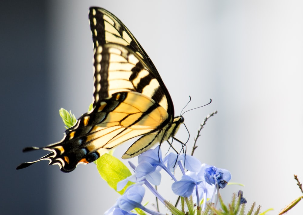 yellow, white, and black butterfly perched on blue-petaled flower