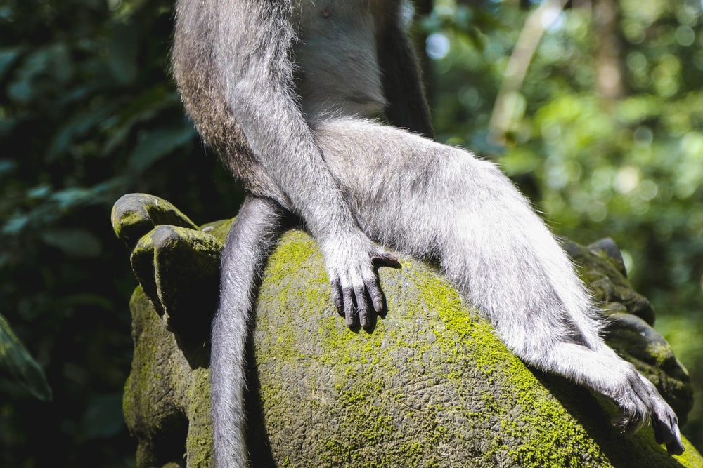 gray and brown monkey sitting on gray stone
