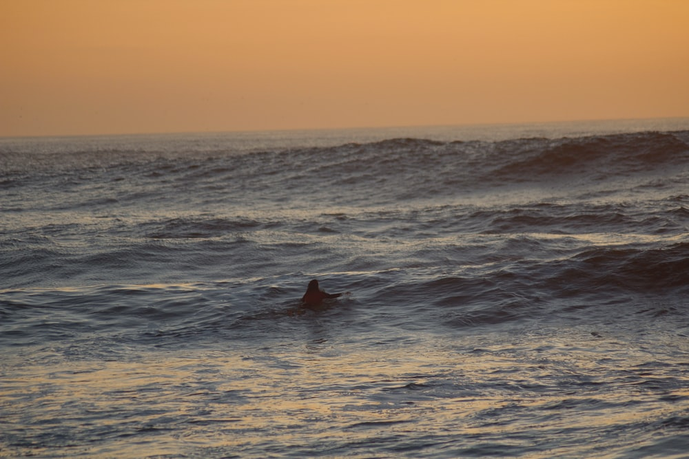 person swimming on sea