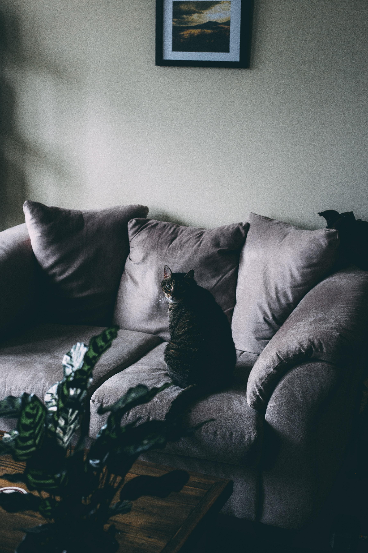 black cat on gray sofa