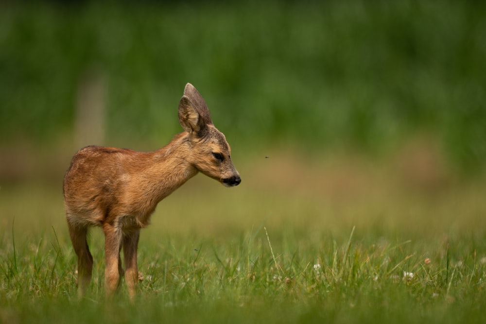 brown fawn during daytime selective focus photography