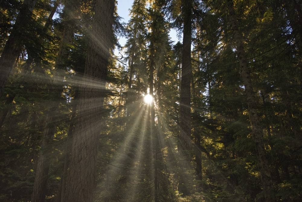 sunrays on trees