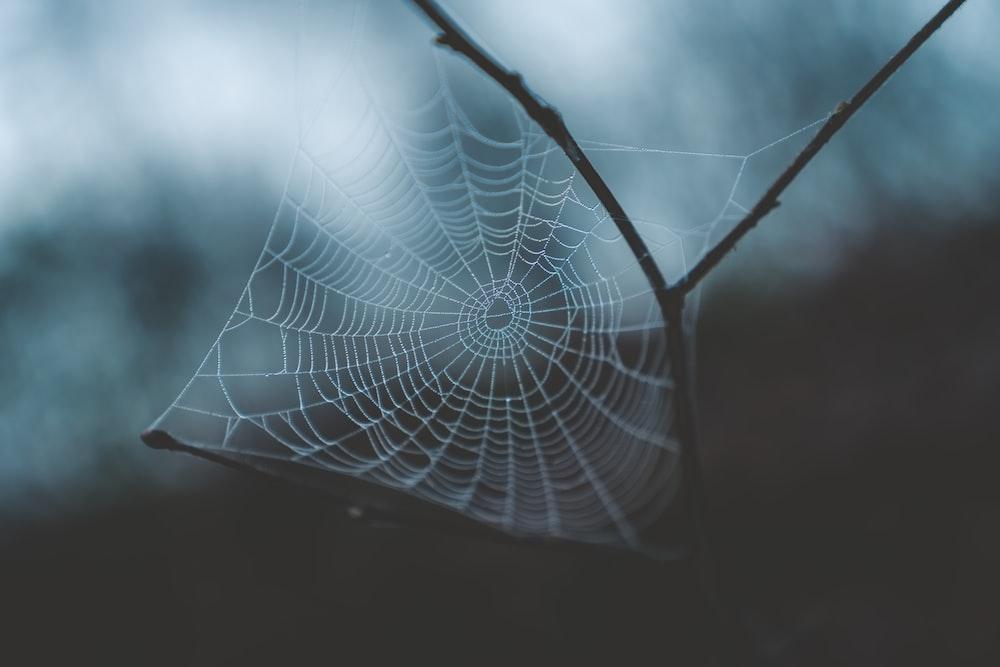 white cobweb